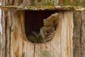 Nelejäs perrättäinen kevät – Rouva Viiru on alakana haatomaa