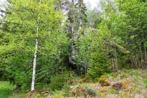 Lepikkomäen järkäleen luola, Saahkarlahti, Leppävirta