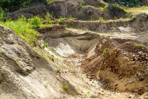 Törmäpääsky – hiekkamontun asukki