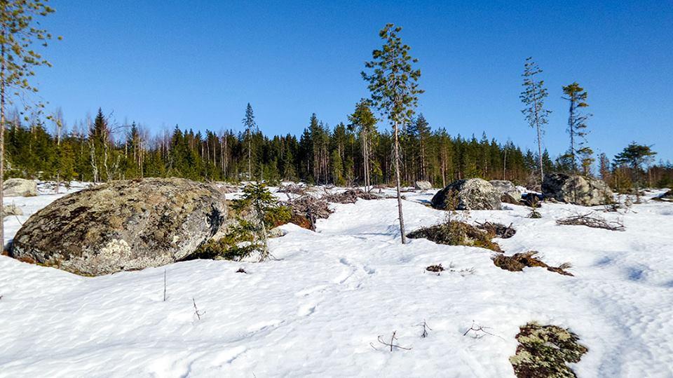 Maaliskuun kuva megaliittikivistä.