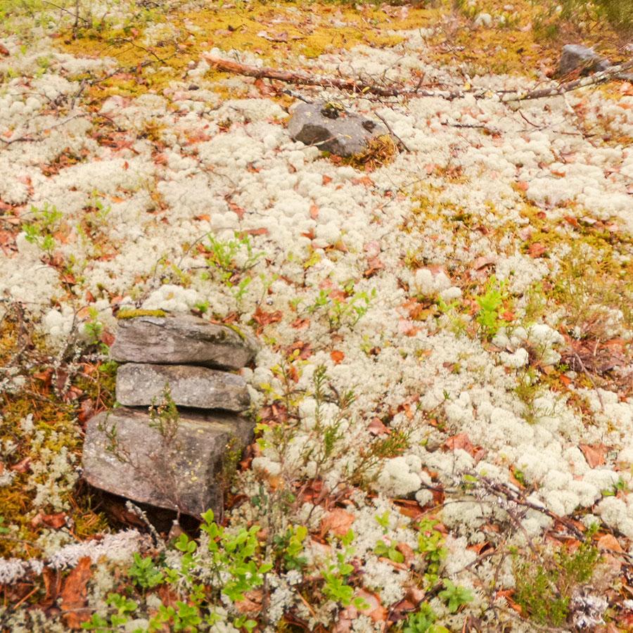 Mahollisen kivikehän jäännöksiä
