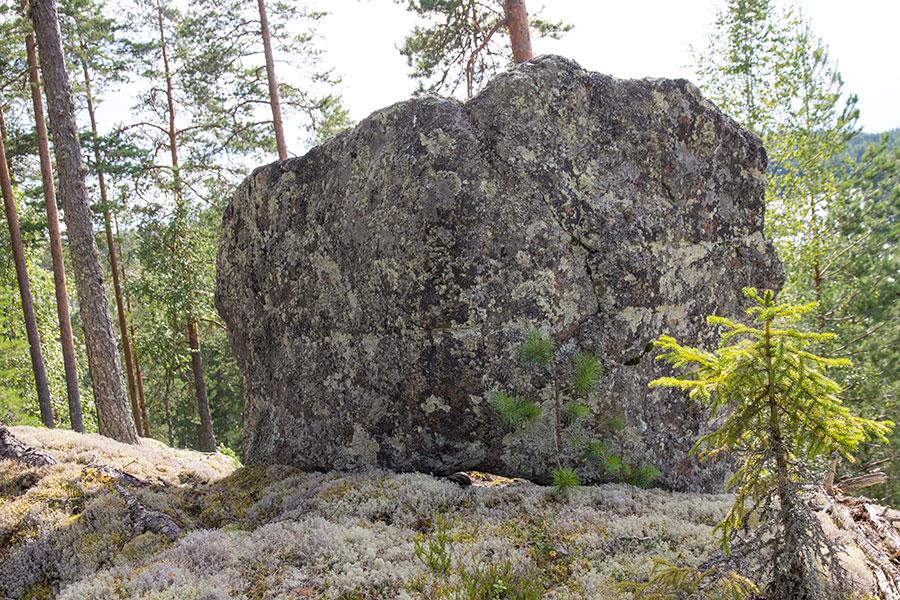 Kivi nyppylällä