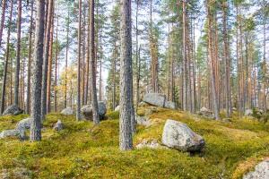 Syvävuori – megaliittikivien täyttämä vuori, Leppävirta