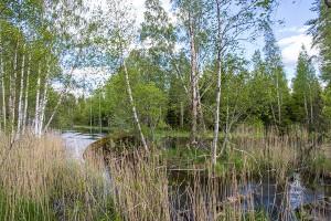 Patakivi – muinainen rajapylväs, Leppävirta
