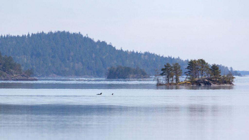 Kuikat, Linnansaaren kansallispuisto, Haukivesi, Rantasalmi