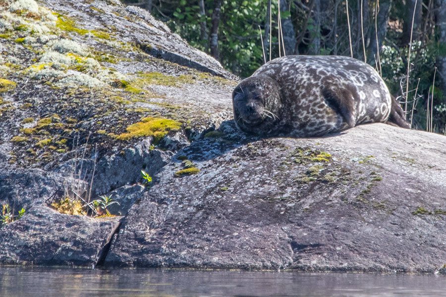 Norppa, Haukivesi, Linnansaaren kansallispuisto
