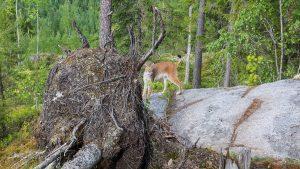 Luonnossa liikkumiseni lähtökohtana on luonnon kunnioittaminen