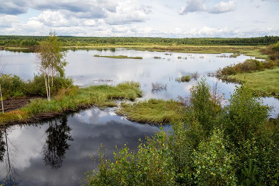 Saarisuon kosteikko, Viitasaari