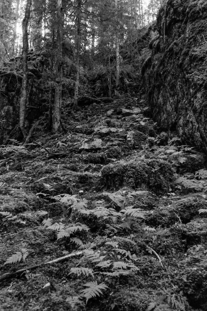 Orinoro, Leppävirta