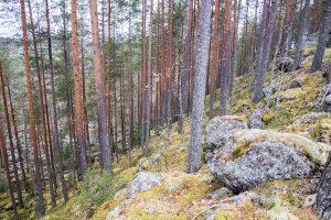 Vuorilammen vuori, Leväniemi, Jäppilä