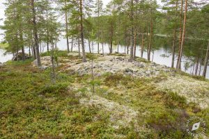 Jouhisaaren lapinraunio, Suvas, Kuopio